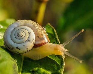 snail-snail-shell-slow-animal-53203